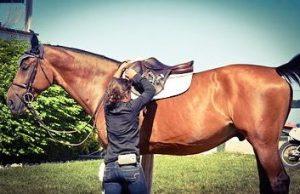 horse wearing saddle