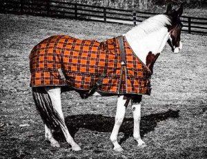 Horse wearing rug