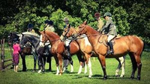 horses at show