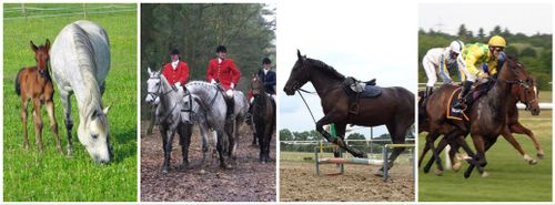 cost to stable a horse types of livery horses train hunt mare foal race