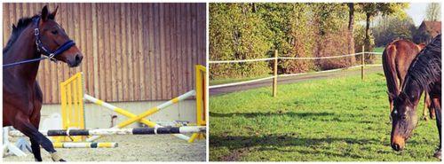 jumps fencing