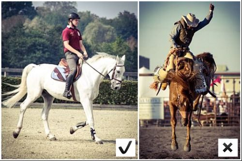 Example what horse to look for