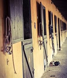 stable for horse