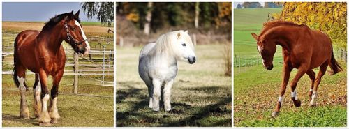 horses, types of horse