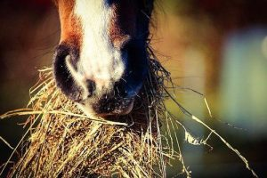 Basic Horse Care for Beginners - Feeding