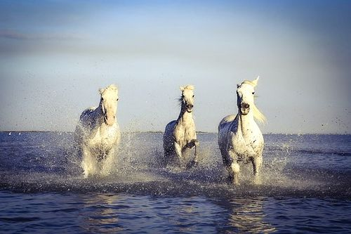 Inspirational Horse Quotes - horses in the sea