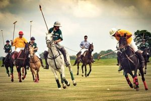 Pony vs Horse Exceptions Polo Ponies