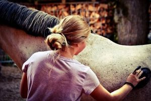 Basic Horse Care for Beginners - Grooming a Horse
