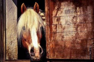 Basic Horse Fore Beginners - Horse in a Stable