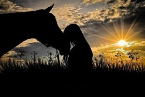 Horse Care Horse Silhouette