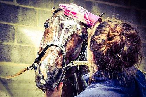 Horse care tips and tricks - washing a horse