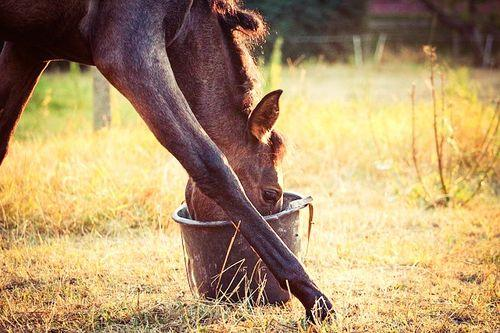 Horse care tips and tricks - foal eating