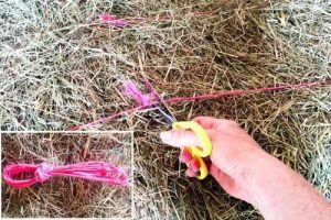 Cutting twine from bales by the knot