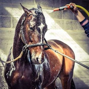 Horse care tips and tricks - bathing a horse with a hose