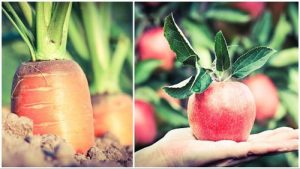 Horse care tips and tricks - carrots and apples
