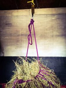 Horse care tips and tricks for feeding - weighing hay