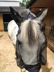 Horse tips and tricks - fly mask with hole for forelock