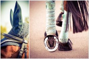 How to clean horse tack - fabric items, ear covers, bandages, etc