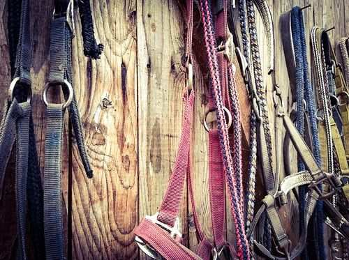 horse tips and tricks - headcollars
