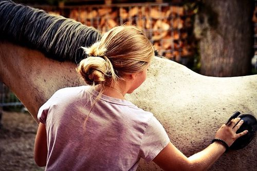 Horse care tips and tricks - grooming a horse