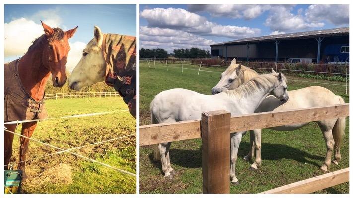 Horse Paddocks individual and pair