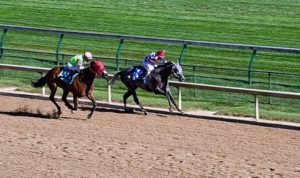 Surfaced Gallop horses