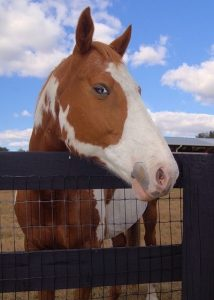 Horse Mesh Fence