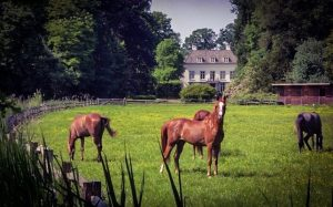 House with Horses Outside