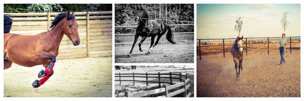 Round pens and Lunging Rings