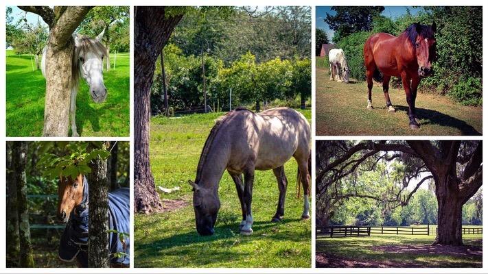 Natural Shelter for Horses