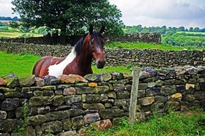 Stone Wall Horse Fence