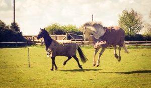 Happy horses in paddocks