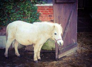 Stable Door Small Horse