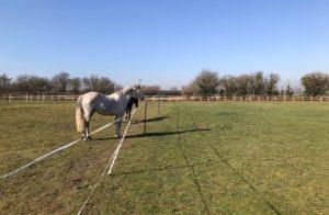 Rotating Paddocks for Horses Grazing