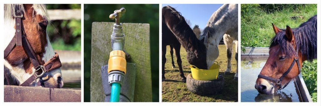 Water in Horse Paddocks