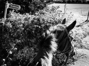 Horse Hacking Bridleway