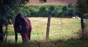 Unsuitable Barbed Wire Horse Fencing