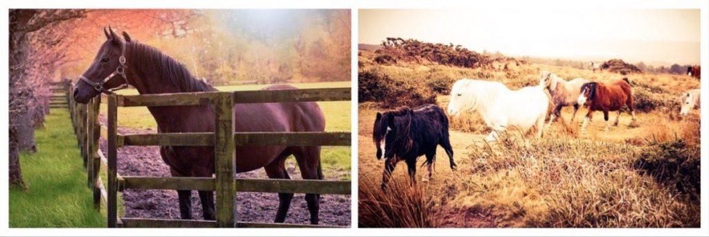 Contrasting Horse Paddocks