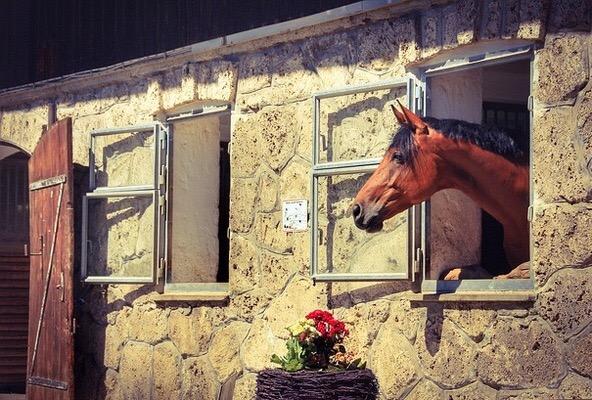 Beautiful stable yard design