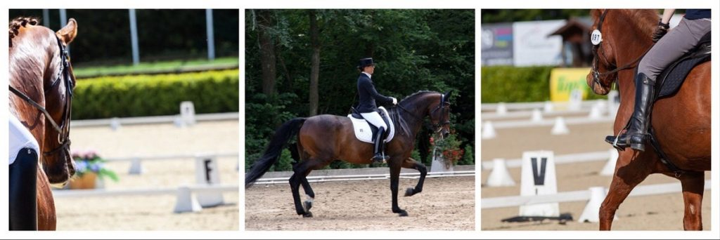 Dressage letters and dressage boards