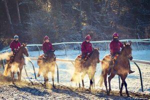 Horse Gallops